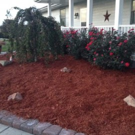 Landscaping colored mulch project